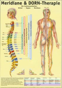 Meridiane & DORN-Therapie